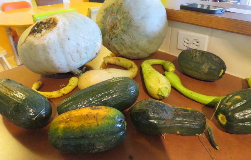 2016 Harvest Report