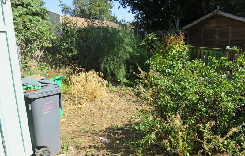 Orange Door Project: Side Yard rehab