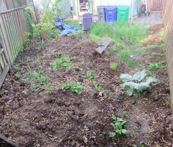 Backyard redo: establishing shots