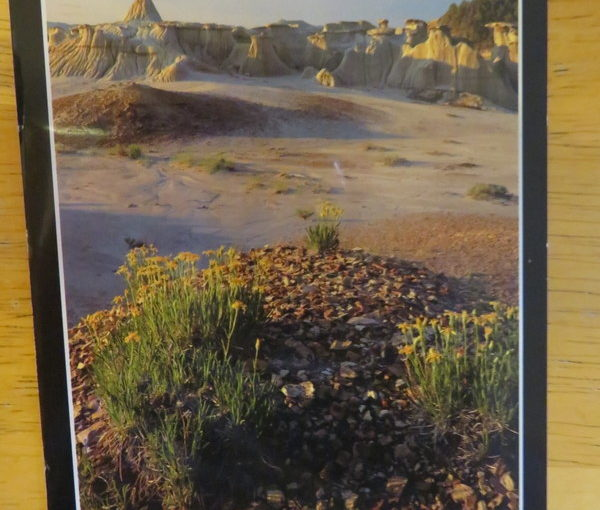 SKS Postcard: Theodore Roosevelt National Park