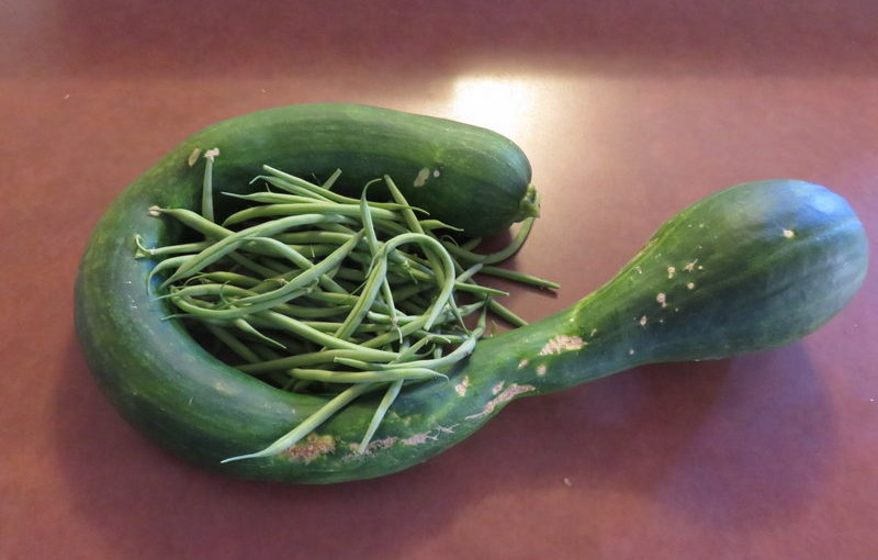 Zucchini and, oh yes, green beans.