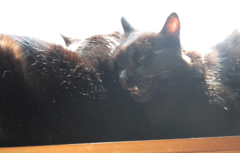 Cats in windowsill