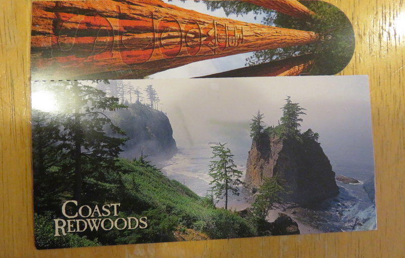 SKS Postcard: Redwoods Bookmark