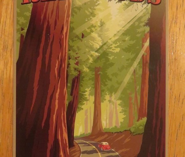 SKS Postcard: Retro Redwoods