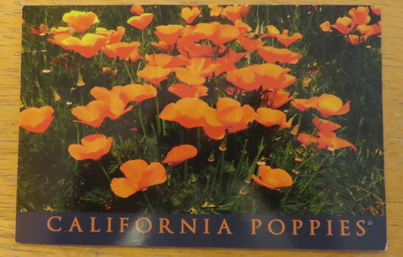 SKS Postcard: Poppies