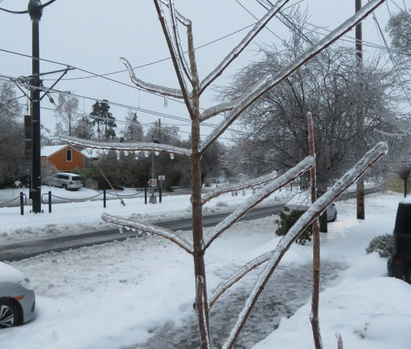 Ice Storms Sure Do Wreak Havoc, But Goodness They are Pretty